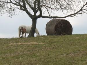 Ponies on Hergest Ridge