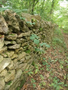 Dry stone wall, Lineover Wood