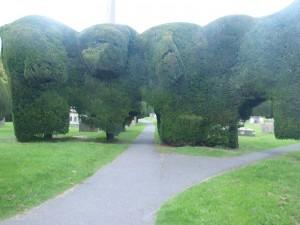 Yew topiary, St Mary's, Painswick