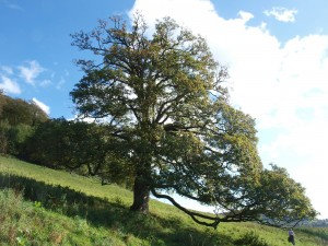 Sunny stroll from Stinchcombe Hill to North Nibley