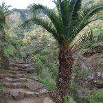 climb towards El Cedro